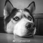 科普 | 犬分离焦虑症:每次分开后,我和狗都疯了