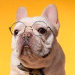 你只知道纯种狗颜值高,却不知道它们到底有多惨……