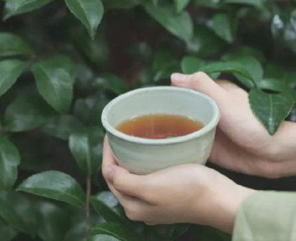 茶叶买回家与试喝时味道不同?