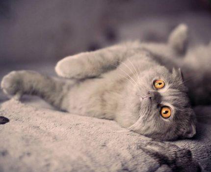 宠爱猫咪的正确做法!