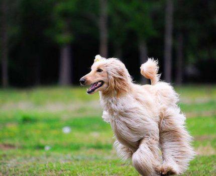 关于公布淮南市大型犬只标准及个人禁养烈性犬只名录的通告