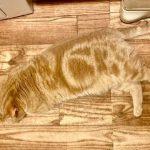 日推网友分享猫猫隐身的瞬间,奇怪的技能又增加了!