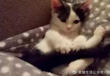 奶猫为什么爱玩自己的尾巴?成猫玩就是有问题?