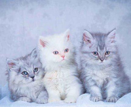 捡到一只猫怎么照顾?