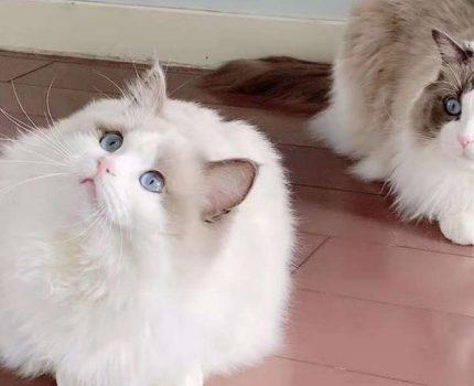 如何教会猫咪叼衔东西