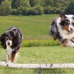 对狗狗来说,是同类朋友重要还是铲屎官重要呢?