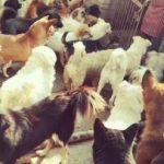 求求大家一起救救这些被运往屠宰场的流浪狗们,急需救助~