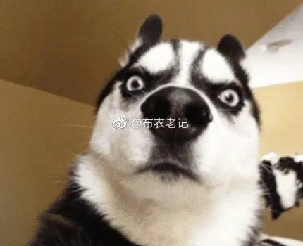 主人动手打狗,狗为啥从不反抗?兽医直言:你在狗眼中是这样的