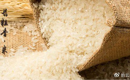 五常大米为什么这么香呢?质量真的这么好吗?