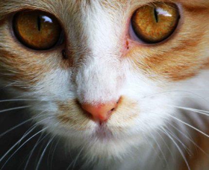 猫咪可以不吃零食吗?