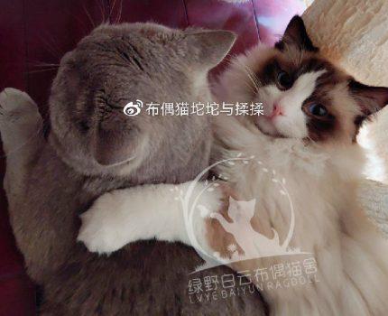 【经验分享】我该怎样挑选猫咪?