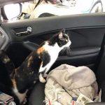 猫咪擅闯车库当游乐园,隔三差五过来玩,嗨翻天!