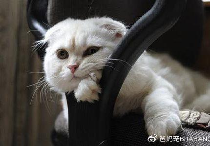 爱or需要?别怀疑,对猫咪来说你可能除了铲屎啥也不是