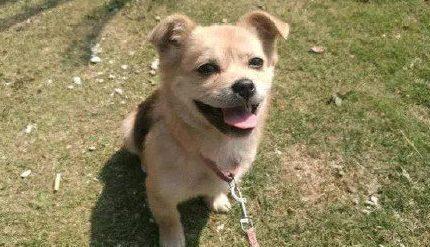 爱狗人从饭店菜刀下救了只小狗,谁知是天生的笑脸,看完好治愈