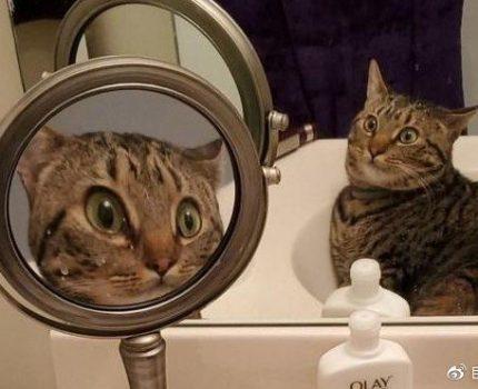 自我陶醉OR自我惊吓?29个动物照镜子的迷惑瞬间