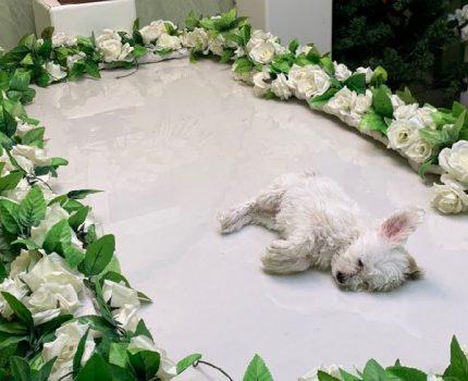 一条幼犬的死亡全过程