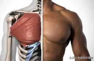 胸肌可以这样练,一对哑铃可以有4种变式卧推,你做了几个?