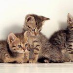 警惕!洗衣机又来害猫了,猫奴们千万别粗心!