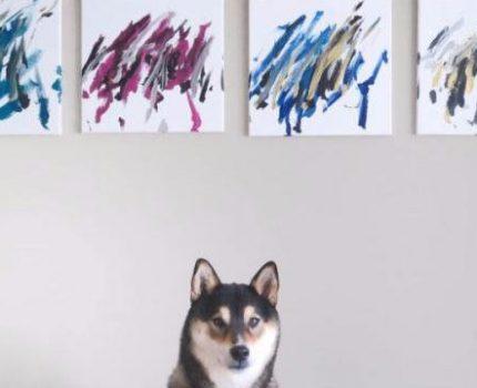 狗生巅峰:坐拥千万粉丝,画作拍卖上万美元