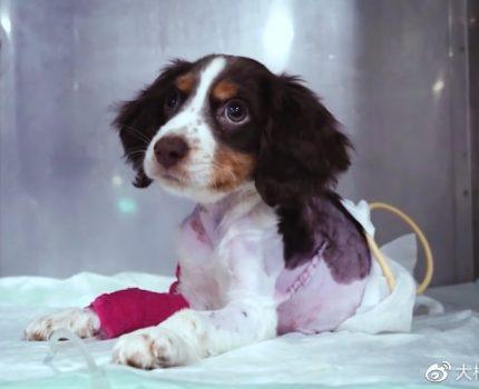 小狗吃啥都反胃,主人不想受累,把它装在纸箱里丢弃,间接帮了它