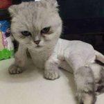 你还在打着为了防止猫咪中暑的幌子给猫咪剃毛吗