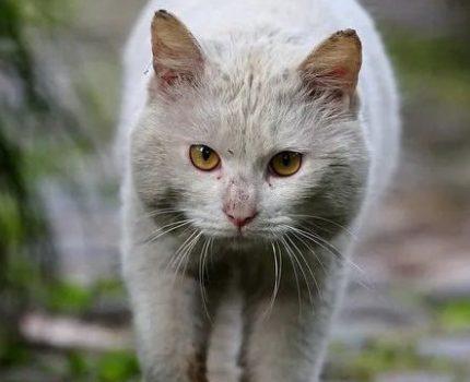 捡回来的猫总是逃跑,我该放它自由吗?