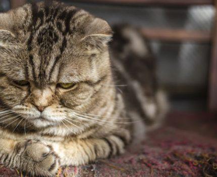 """猫咪总是没事找事?它生活中的五大""""压力源"""",主人却往往不在乎"""