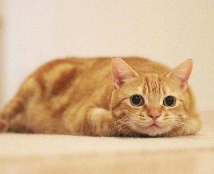 """我劝你,养猫千万别养""""大橘为重"""""""