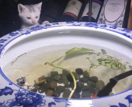 16个鱼缸,连泡菜坛子都用上了!作为女生也是极认真的!