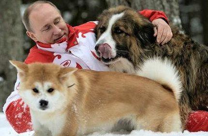 普京:今年过节不收礼,收礼只收小狗狗!
