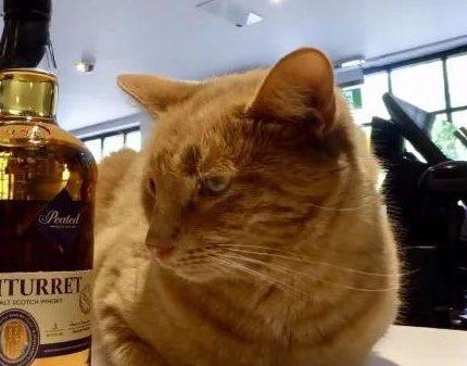 酒厂的员工猫玩忽职守不务正业,却受到酒厂职工爱戴!