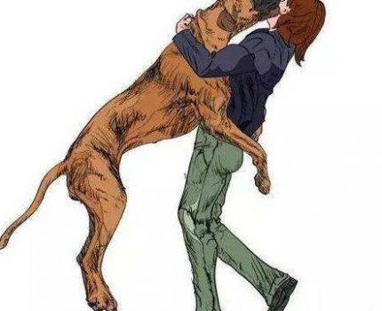宠物心理:狗狗为什么扑人?原来是这个原因!