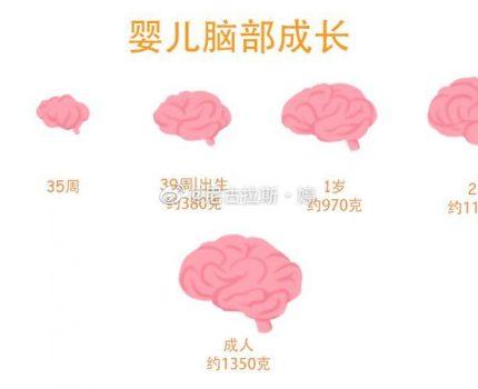 孩子一生仅有一次的大脑发育高峰期,父母千万别错过~