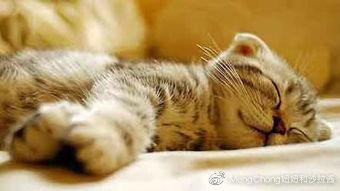 你知道最好的猫咪时段吗?