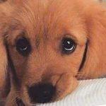 """""""我的狗太笨没救了""""——其实绝大部分狗都不笨,""""笨""""的是主人"""
