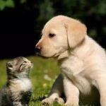 20张图告诉你,猫和狗之间的区别,太形象了!(转载)