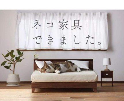 有哪些暴击灵魂的猫咪家居设计?