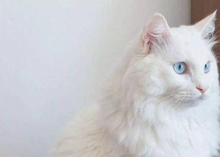 为什么我劝你别养猫?让领养代替购买,愿遇见皆一生