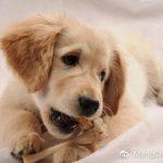 喂狗狗的禁忌,你知道吗?
