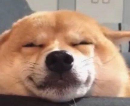 狗狗知道自己是狗吗?
