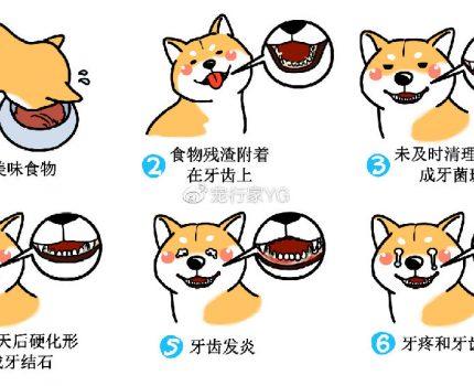 狗狗口腔清洁实操指南:用品选择、刷牙指导和日常护理