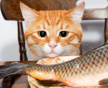 养猫一点都不累?每天若遇着这5件事,猫咪开心了,主人却累了