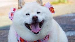 伯纳天纯夺冠狗粮榜,最宠登猫零食榜第一名   京东宠物618战报