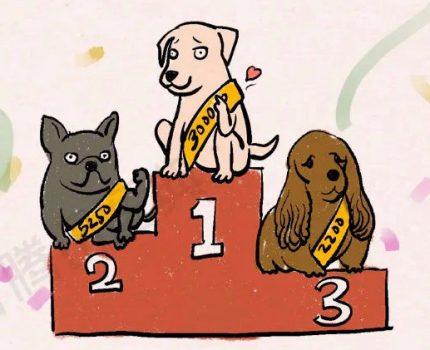 养狗对身体的11种好处,第8个很多人都想要!我也是刚知道