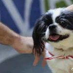 真正爱狗的人,会有这4个明显的特征,太真实了!