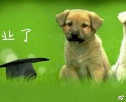 给狗狗找女朋友,用我的人言和它的旺语吵架😃