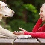 宠物狗不尊重主人的原因,具体表现及纠正方法!