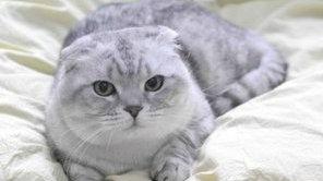 如何饲养猫咪