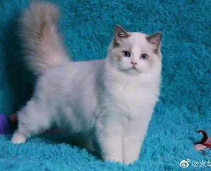 火华子的猫舍起源
