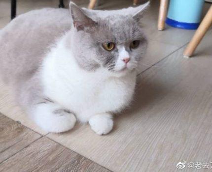 猫咪化毛膏变伤胃泻药??我们不发声还有谁能帮毛孩子发声?